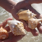 7-shells_0